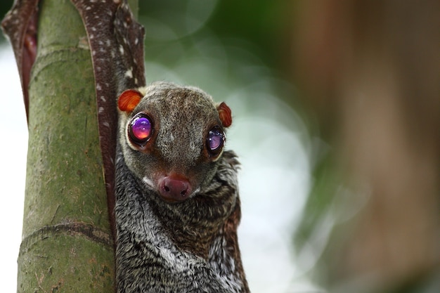 Close de um morcego pendurado em um bambu com o olho bem aberto