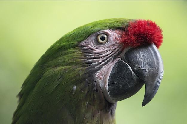 Close de um papagaio verde sob a luz do sol