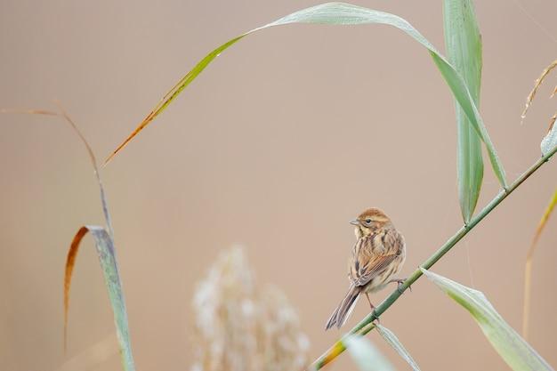 Close de um pardal empoleirado na grama contra um fundo desfocado