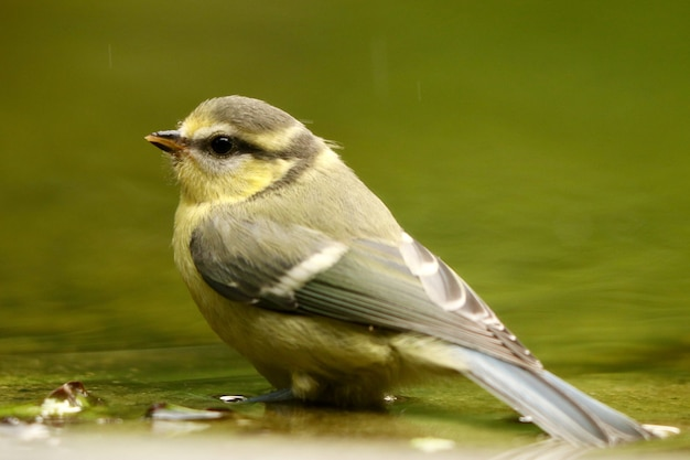 Close de um passarinho à beira do rio