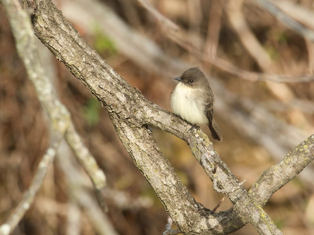 Close de um pássaro cinza em um galho