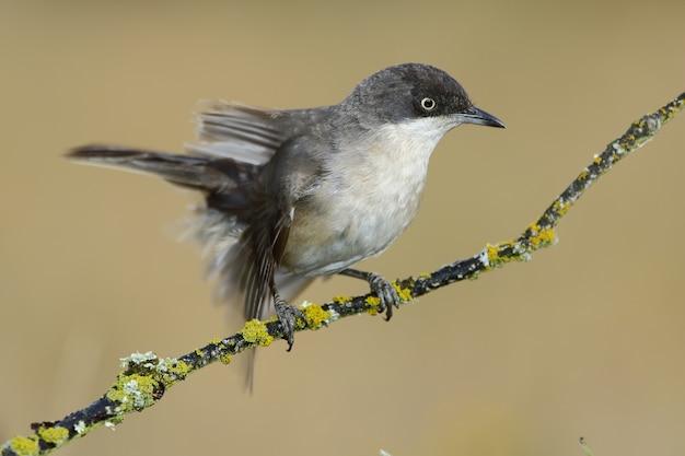Close de um pássaro exótico descansando no pequeno galho de uma árvore