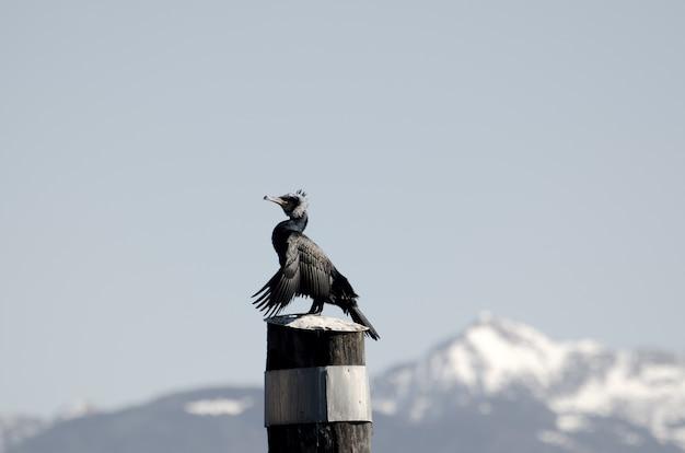 Close de um pássaro pousando em um poste de madeira em um céu claro