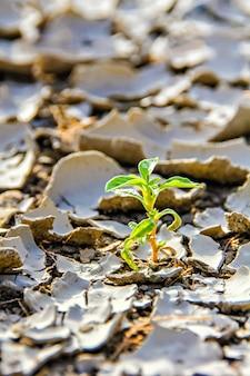 Close de um pequeno broto crescendo em terra seca e rachada