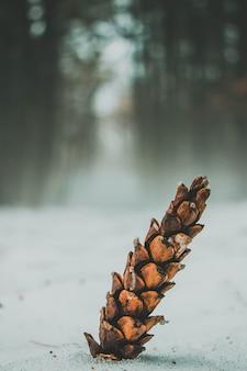 Close de um pinheiro no chão coberto de neve com uma floresta no fundo desfocado