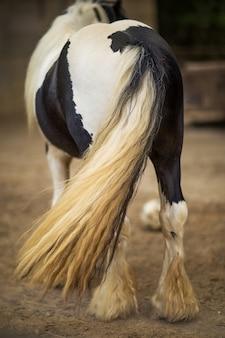 Close de um rabo de cavalo preto e branco em um rancho sob a luz do sol com um fundo desfocado