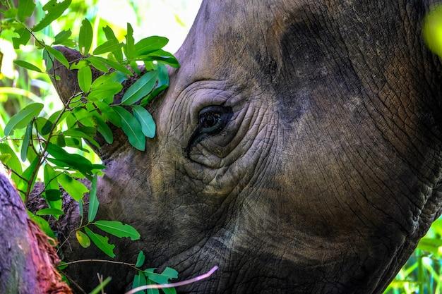Close de um rinoceronte perto de uma árvore