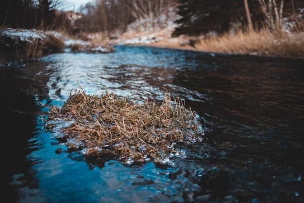 Close de um rio com arbustos