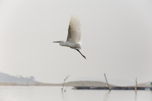 Close de um único gannet voando sobre um lago com céu claro