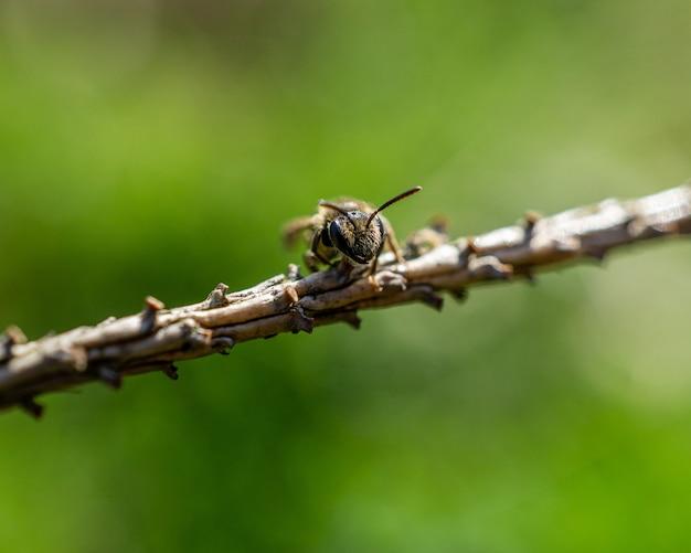 Close de uma abelha no galho da árvore