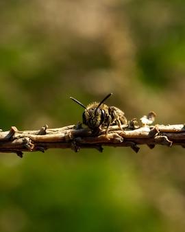 Close de uma abelha no galho de uma árvore contra o fundo verde embaçado
