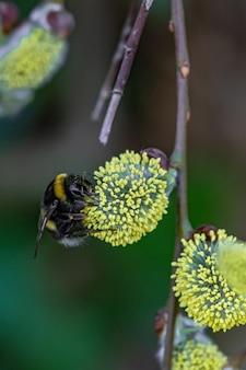 Close de uma abelha sentada em uma flor amarela