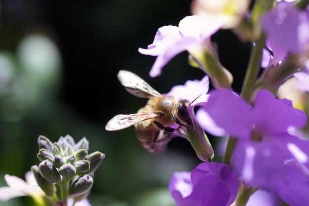 Close de uma abelha sentada em uma flor