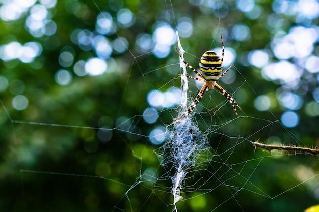 Close de uma aranha colorida em uma web com vegetação no efeito embaçado e bokeh
