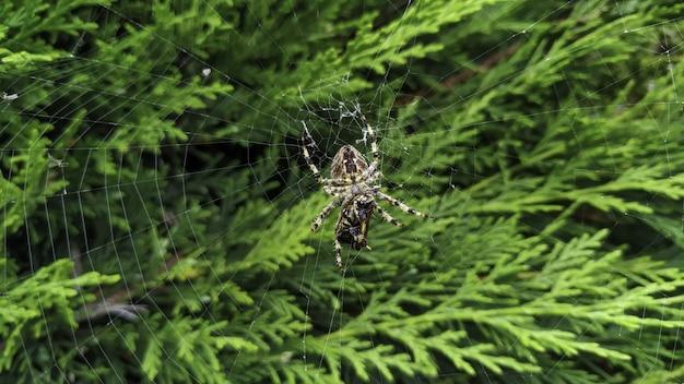 Close de uma aranha cruzada na teia sob a luz do sol com vegetação embaçada