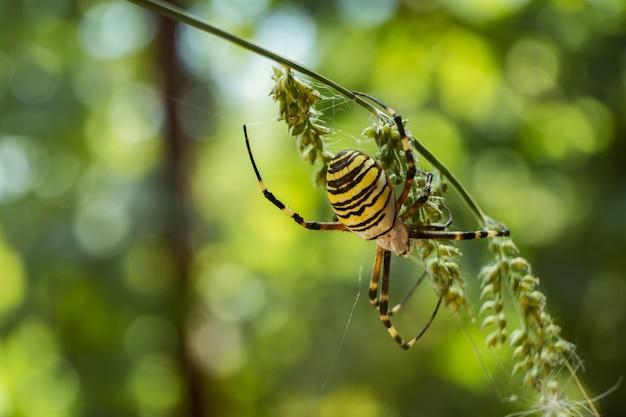Close de uma aranha de jardim amarela em um galho em um campo sob a luz do sol