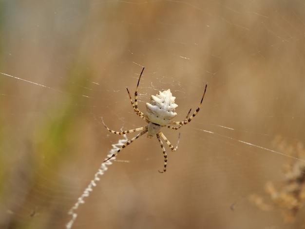 Close de uma aranha em uma planta