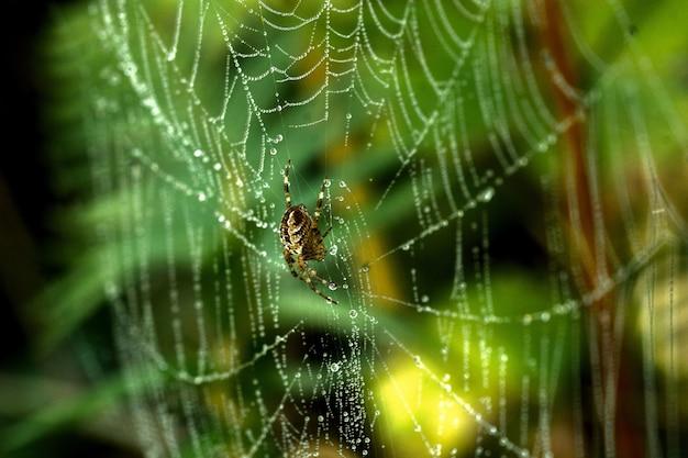 Close de uma aranha em uma teia de aranha