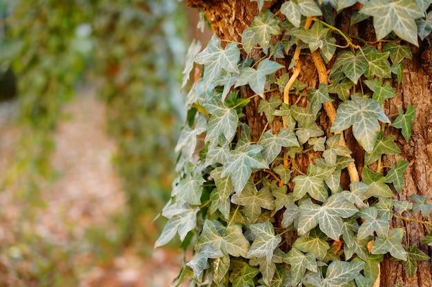 Close de uma árvore com folhas crescendo nele
