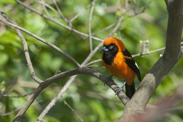 Close de uma bela andorinha de celeiro sentada no galho de uma árvore
