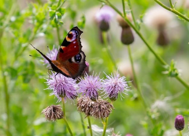 Close de uma borboleta em uma flor violeta