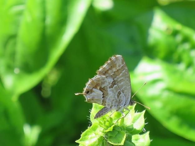 Close de uma borboleta em uma folha de grama