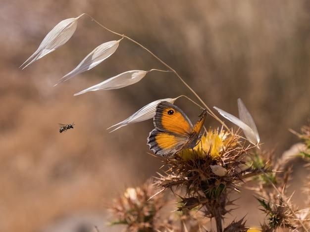 Close de uma borboleta laranja em uma flor silvestre com um borrão
