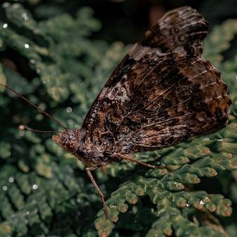 Close de uma borboleta marrom em uma planta verde
