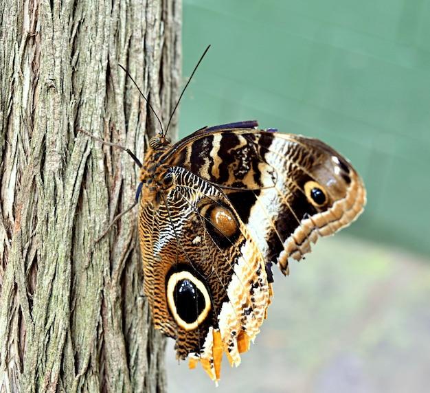 Close de uma borboleta marrom na casca de uma árvore sob a luz do sol