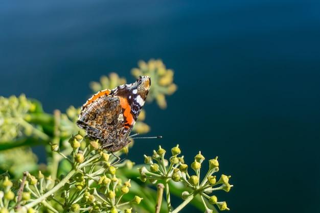 Close de uma borboleta sentada em uma planta verde com um borrão