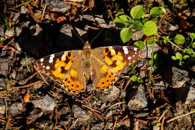 Close de uma borboleta sentada em várias pedras pequenas ao lado de uma folha verde