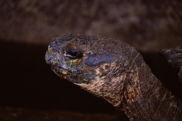 Close de uma cabeça de tartaruga com fundo desfocado
