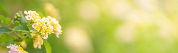 Close de uma flor amarela e branca em um fundo verde desfocado
