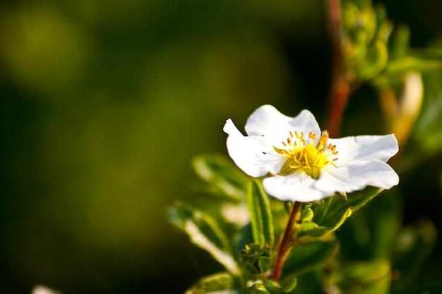Close de uma flor branca atrás de um fundo verde