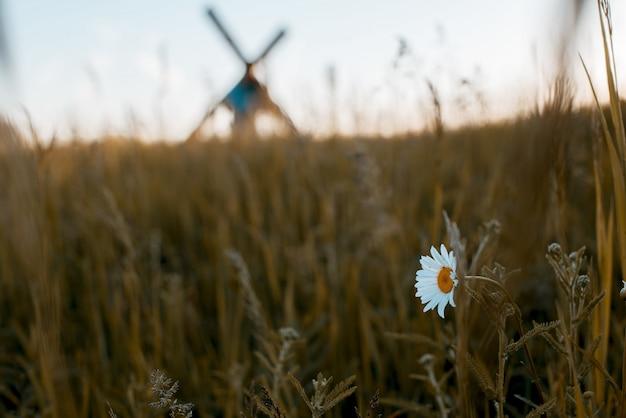 Close de uma flor branca em um campo gramado com um homem desfocado carregando uma cruz no fundo
