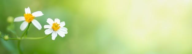 Close de uma flor branca em um fundo verde desfocado sob a luz do sol
