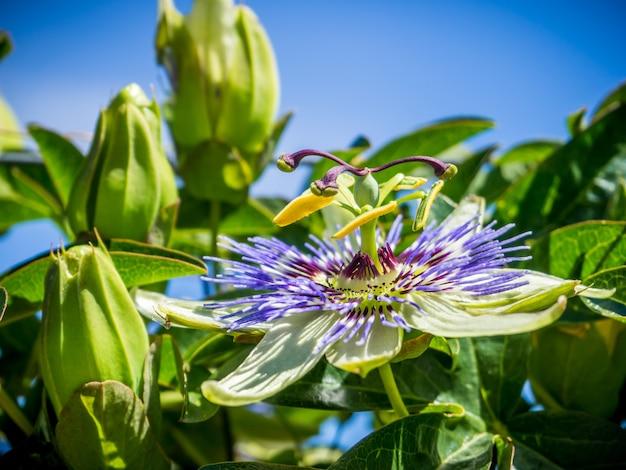 Close de uma flor de pétalas roxas com folhas verdes sob um céu azul