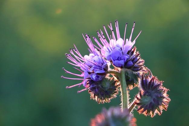 Close de uma flor exótica incrível