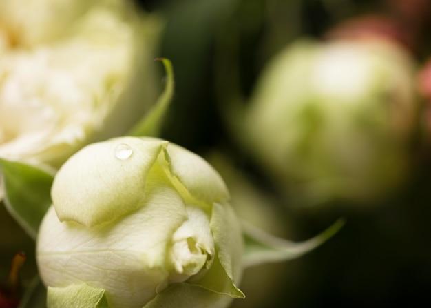 Close de uma flor rosa lindamente desabrochada