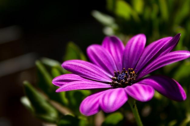 Close de uma flor roxa crescendo na grama