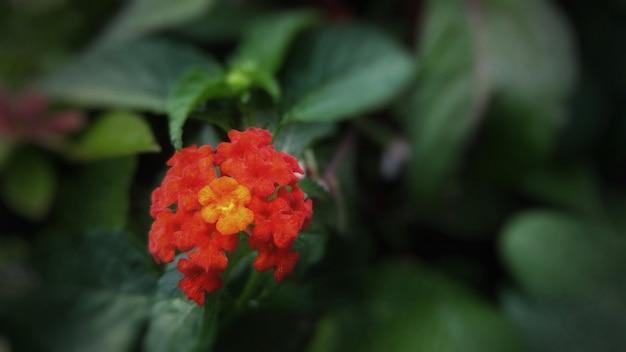 Close de uma flor vermelha