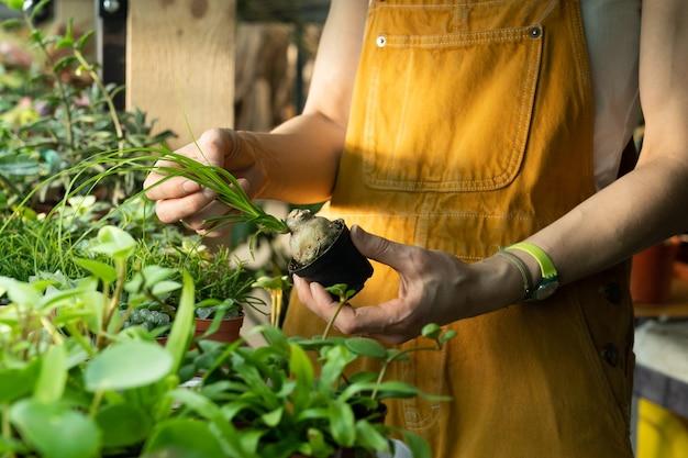 Close de uma florista cuidando do viveiro de plantas com uma pequena funcionária da estufa de suculentas trabalhando
