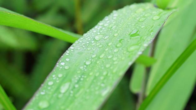 Close de uma folha e gotas de água no fundo