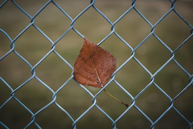 Close de uma folha marrom em uma cerca de arame