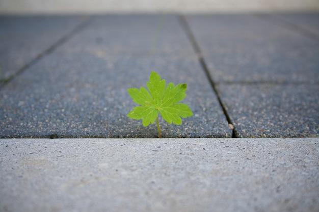 Close de uma folha verde na calçada