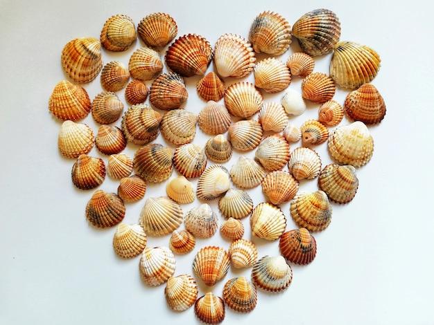 Close de uma forma de coração feita com conchas