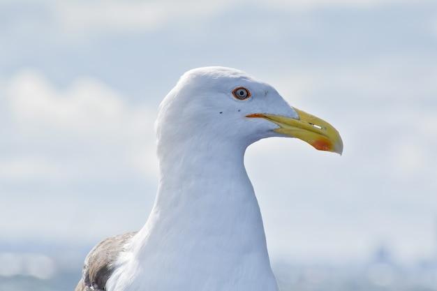 Close de uma gaivota ao ar livre durante o dia