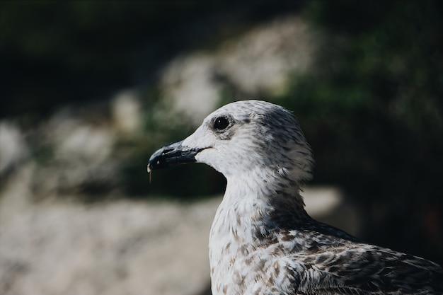 Close de uma gaivota cinza com um borrão