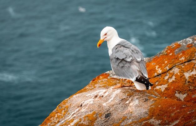 Close de uma gaivota de patas amarelas nas rochas perto do mar durante o dia