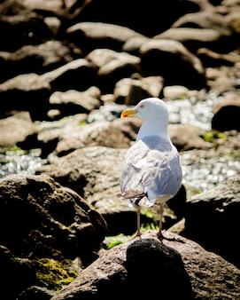 Close de uma gaivota em pé nas rochas perto da costa